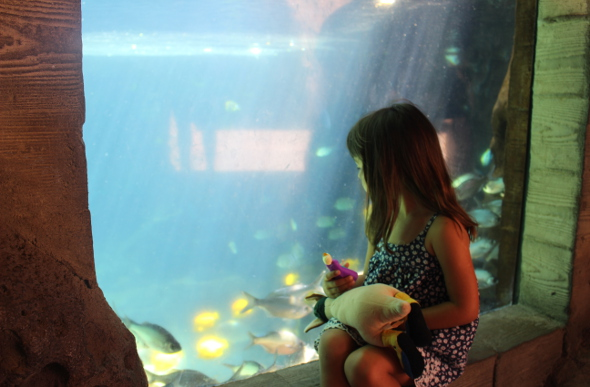 A little girl looks at the fish within the viewing tank at Aulani resort