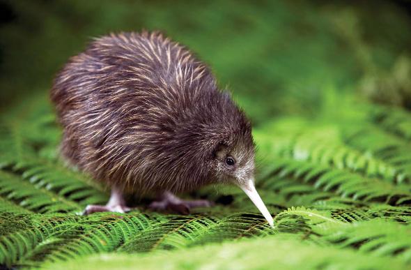 Rotorua & Lake Taupo – Top 6 For Kids