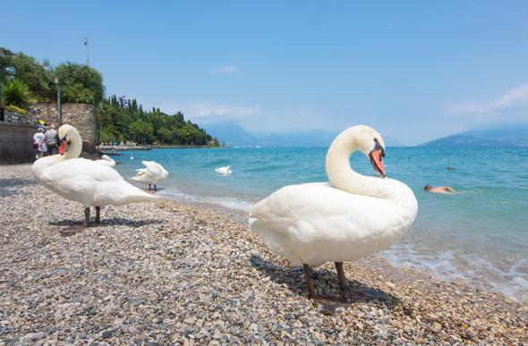 Sirmio peninsular beach