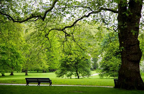 Roses In Garden: 10 Best London Parks & Gardens