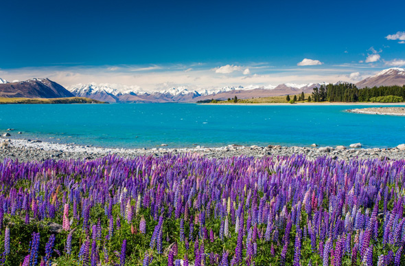 Open Shutter: Spring Colour In New Zealand