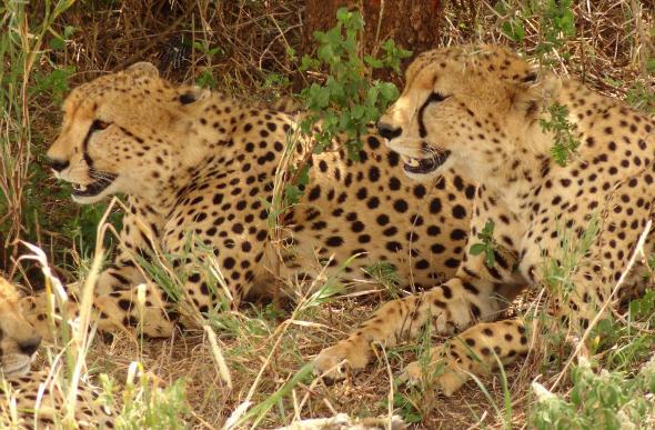Inspirational Images Of An African Safari