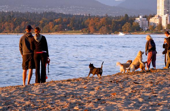 People and dogs enjoy the off-leash area of Vanier Park along Kitsilano Beach