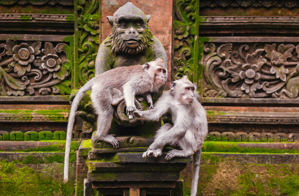 Two long-tailed macaques on a monkey statue
