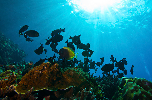 Return to christmas island flight centre travel blog for Where do flying fish live
