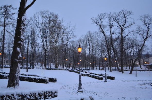Trees and lamps covered in snow