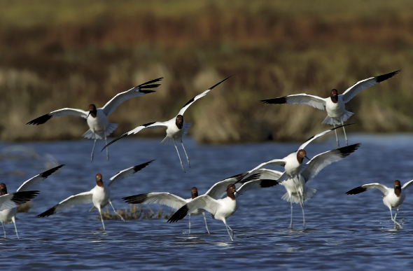 Birds flying over the water of the Coorong