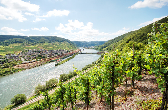 Mosel River vineyard
