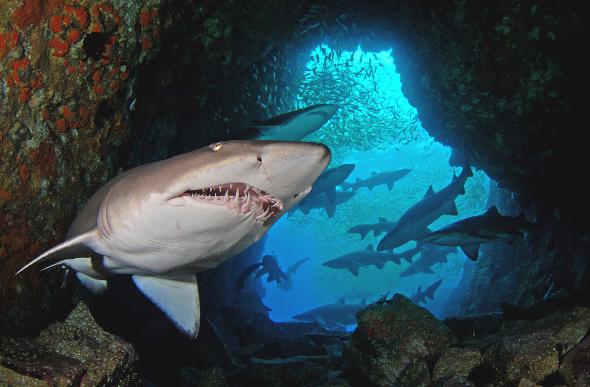 7 best dive sites in australia