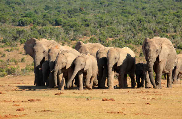 South Africa – Oranges and Elephants