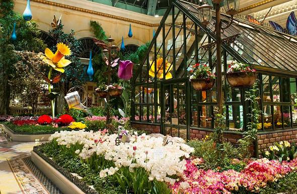 Northern Hemisphere Flower Festivals