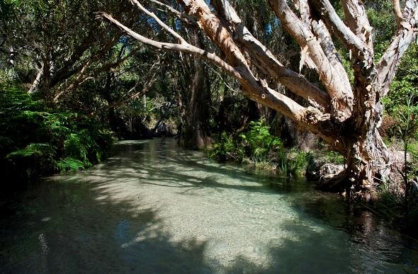 Eli Creek, Fraser Island, Queensland, Australia
