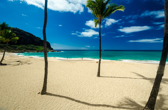 The palm trees, white sand, and ocean blue of Hawaii's Makaha Beach.