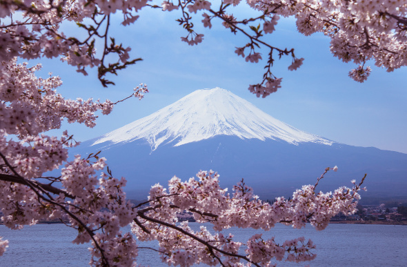 Mt Fuji seen through the branches of a cherry blossom tree