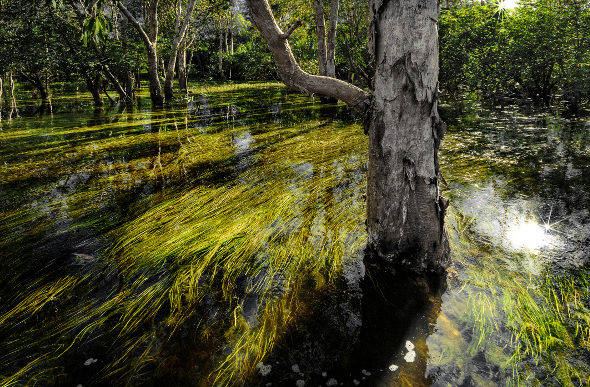 Yellow Water Billabong in Kakadu National Park in the Northern Territory.