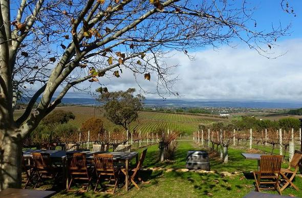 Outdoor seating under a tree overlooking McLaren Vale