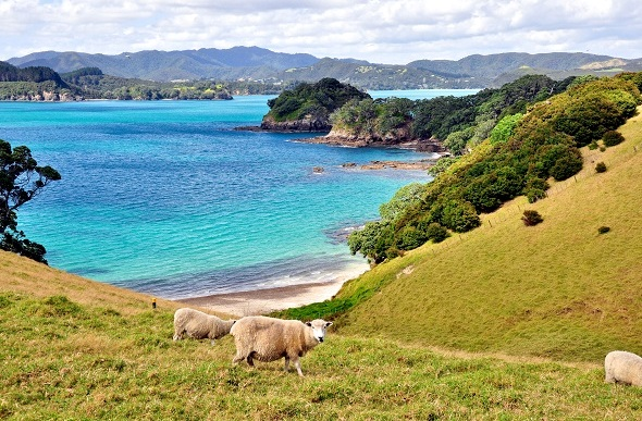 Rolling green hills meet the azure waters of the Bay of Islands.