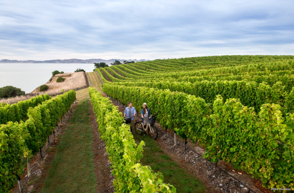 Marlborough winery