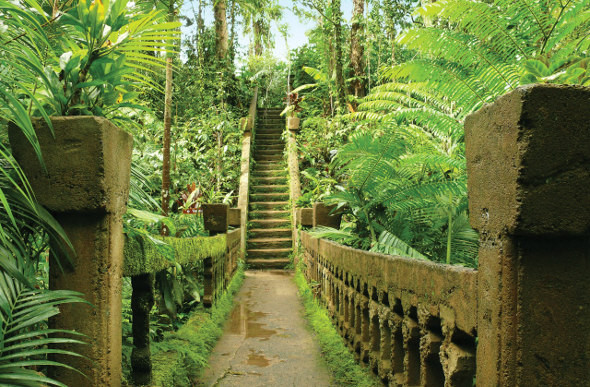 The overgrown bridge leading to the staircase at Paronella Park is full of dense foliage like ruins in the jungle