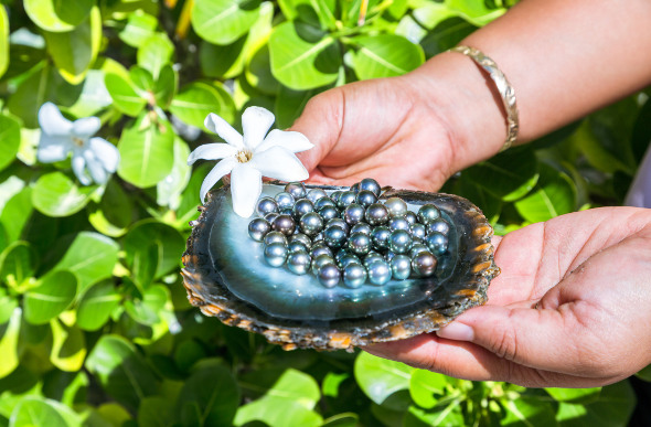 A clamshell full of Tahitian black pearls.