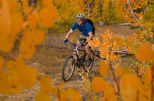 A man goes mountain-biking through aspen forest in North Lake Tahoe, US.