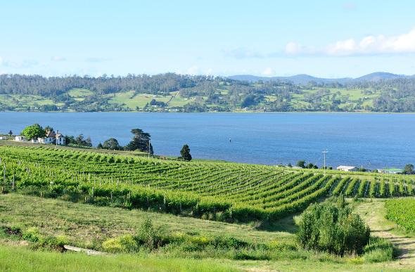 Vineyards on the Tamar River in Tasmania