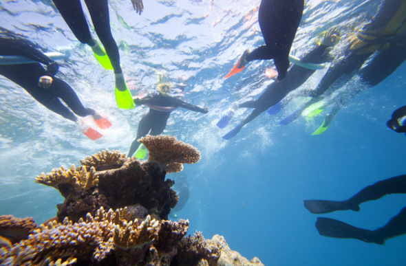 Snorkellers float above the coral on the Great Barrier Reef.