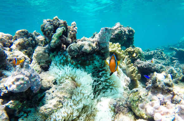 Turtle Island snorkelling with clown fish