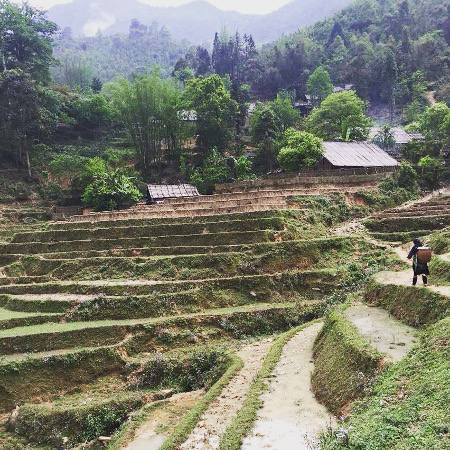 A Vietnamese woman works in a rice terraced rice field in a village in Sapa.
