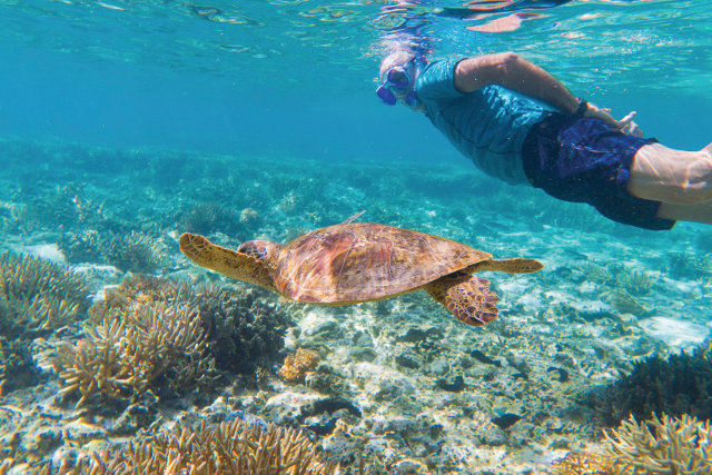 man snorkeling with giant turtle.