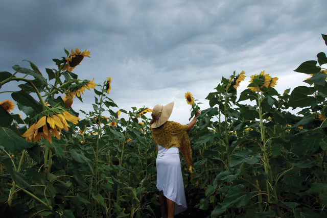 Woman in sunflower field Bundaberg