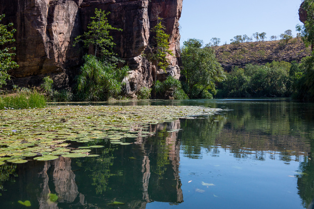 One of the emerald green pools at Boodjamulla National Park