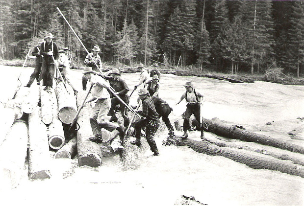 A group of log drivers attempting to direct logs downriver