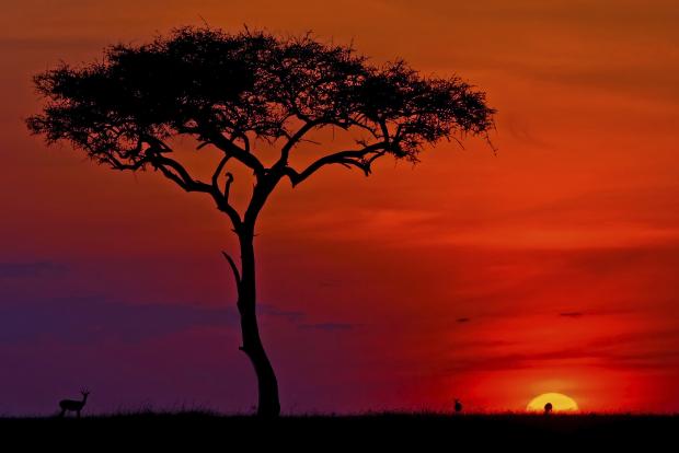 Chasing the sun as 24 horas de le mans - 4 6