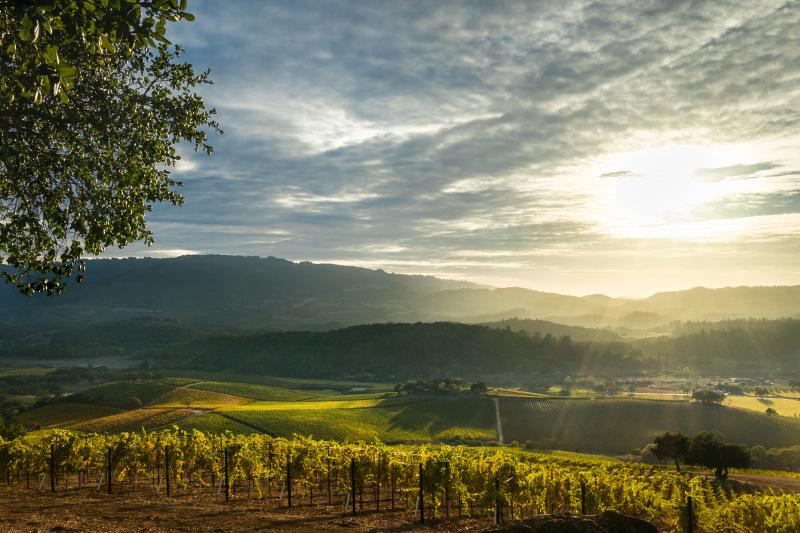 Napa Valley vineyard at sunrise