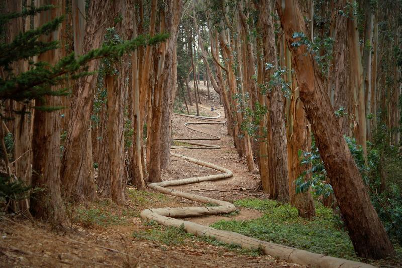 The Wood Line in the Precidio