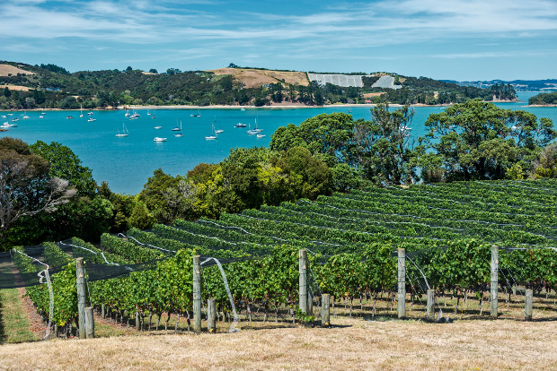 A view over a vineyard to the blue waters surrounding Waiheke Island