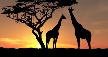 external image africa-1.jpg