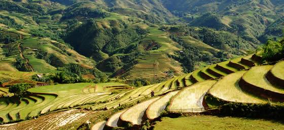 Asia: Rice Fields