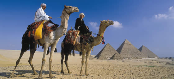 Cairo: Camels at the Pyramids