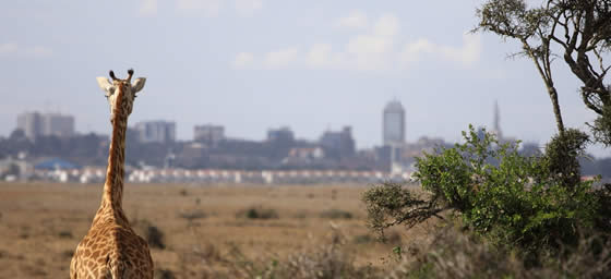 Nairobia: Skyline