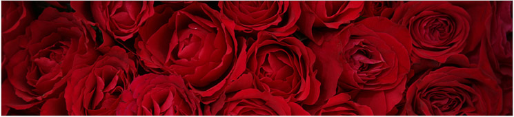 Valentine S Day Holiday Packages For Valentine S Day