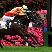 In the afternoon of the first Tuesday in November each year Australia literally stops in its tracks to watch the Melbourne Cup held at Flemington ... & Melbourne Cup Day | Holiday Packages | Flight Centre