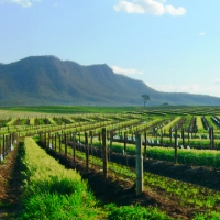 Hunter Valley 2 Nights 4.5-Star + Breakfast