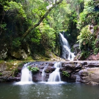 Brisbane, O'Reillys Lamington National Park