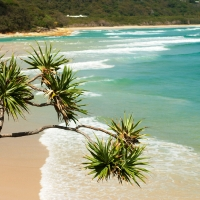 Gold Coast, Dolphin and Stradbroke Island