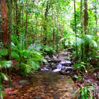 Cairns, Cape Tribulation and Daintree