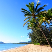 Palm Cove Family - Flights, STAY 5 Nights, PAY 4, 4-Star + Great Australian Wildlife Experience | Palm Cove