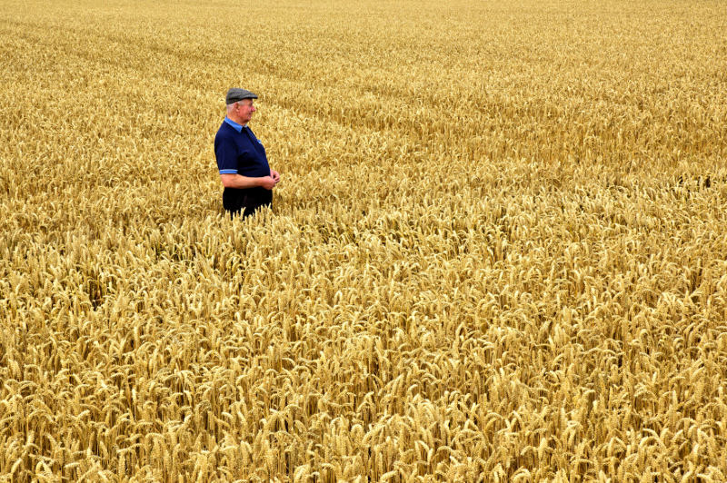 A farmer tends to his field in County Cork.