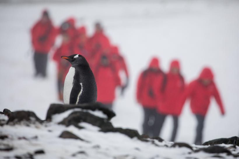 penguin in antarctica with explorers behind